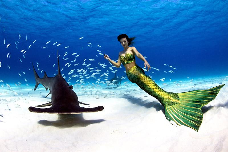 Hammerhai und echte Meerjungfrau
