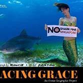 Professionelle Meerjungfrau schwimmt mit Tigerhaien
