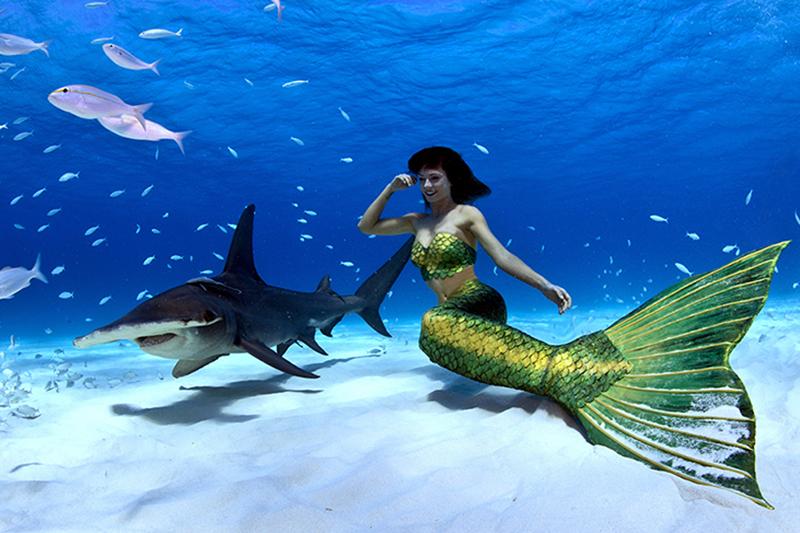 Traumjob Meerjungfrau - Schwimmen mit Haien gehört dazu