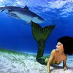 Meerjungfrau und Tigerhai