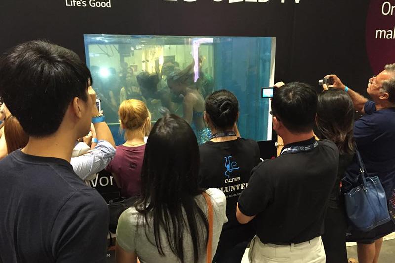 Unterwassershows mit Meerjungfrauen