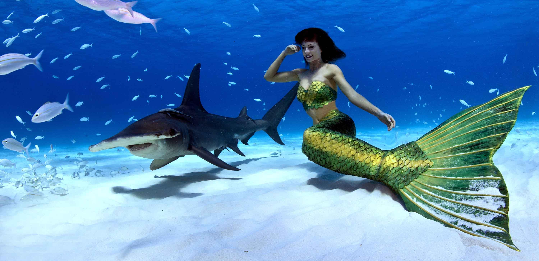 Profi Meerjungfrau Kat schwimmt mit Haien