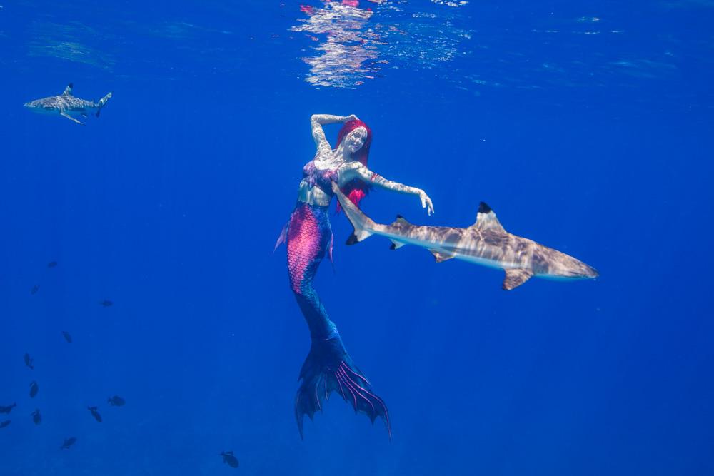Katrin Gray macht Karriere als Meerjungfrau und schwimmt mit Haien