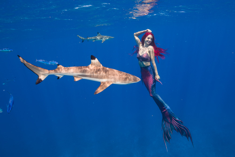Profi-Nixe - Katrin macht Karriere als Meerjungfrau - Foto von Ian Gray