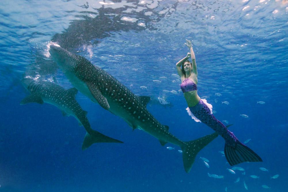 Meerjungfrauen-Bilder - Unterwasser Meerjungfrauen Shooting mit Walhaien und Mermaid Kat