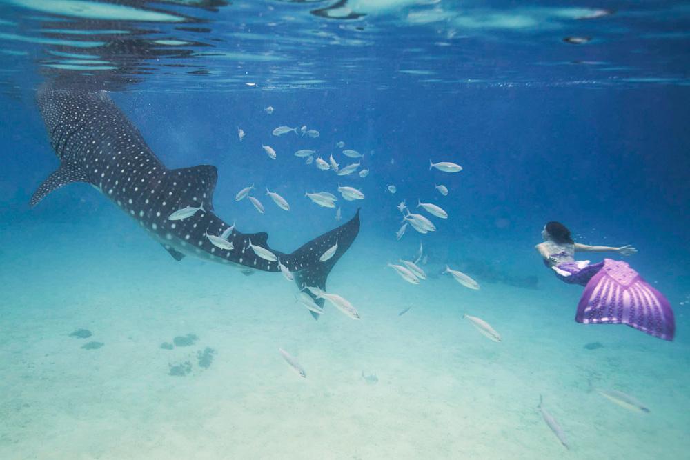 Wie eine Meerjungfrau zu schwimmen ist nun möglich war Katrins großer Traum